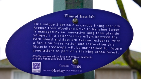 East 6th Elms are a Place that Matters to Vancouverites
